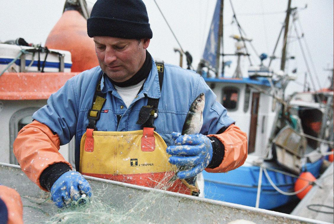 Frischer Fisch aus der Ostsee gehört zum kulinarischen Kulturgut MVs