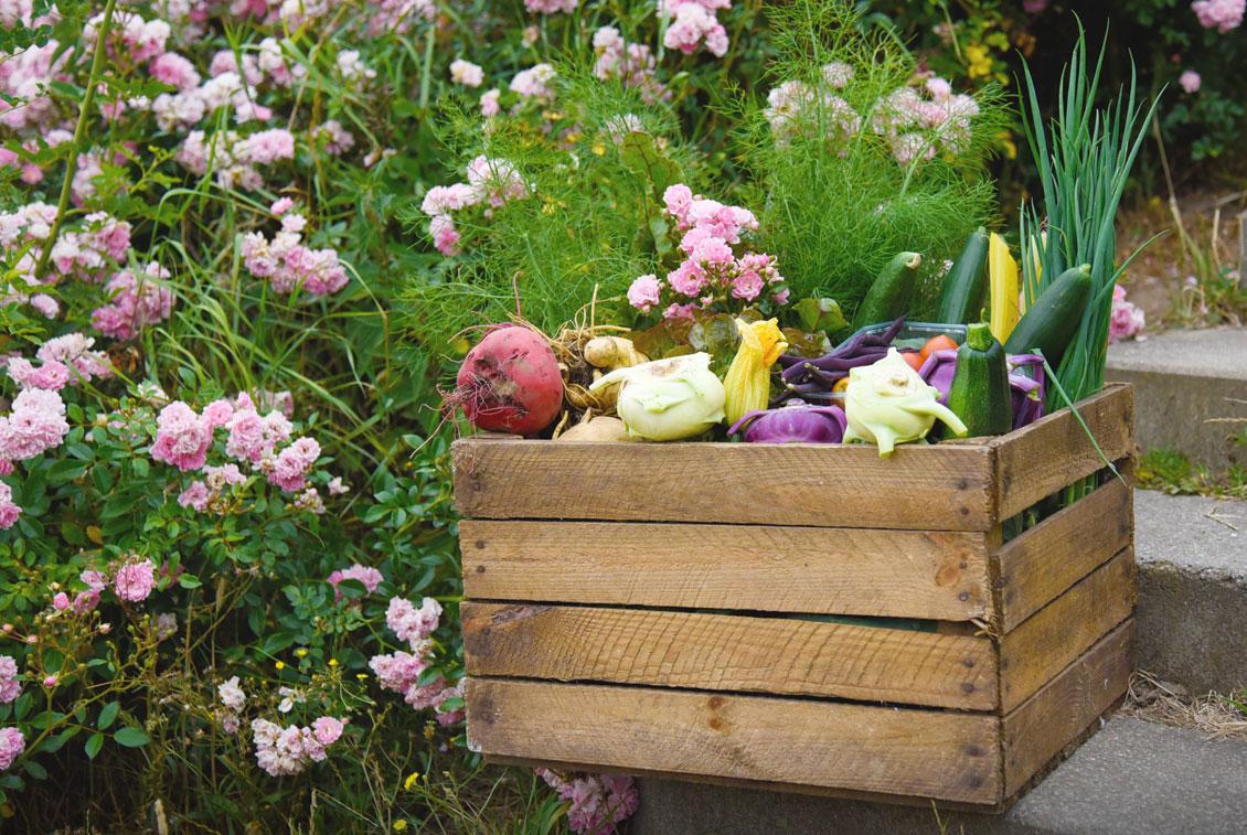 Nicht nur Gastronomen freuen sich über das frische Gemüse von Rügen: Mit dem Aboservice des Guts können Hobbyköche auch zu Hause die Bio-Feldfrüchte genießen.