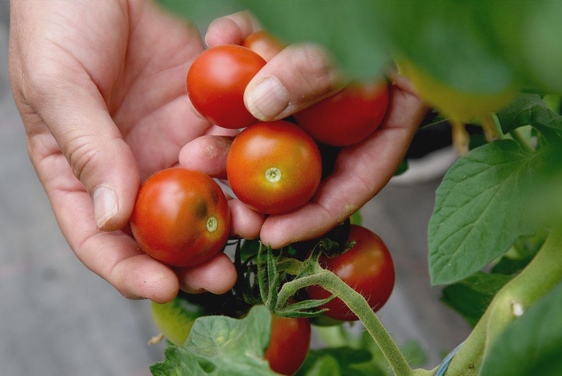 Seit 1911 wird das Gut landwirtschaftlich genutzt.